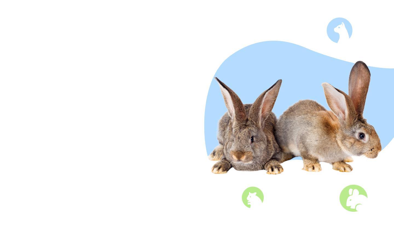 Вакцинациякроликов фото