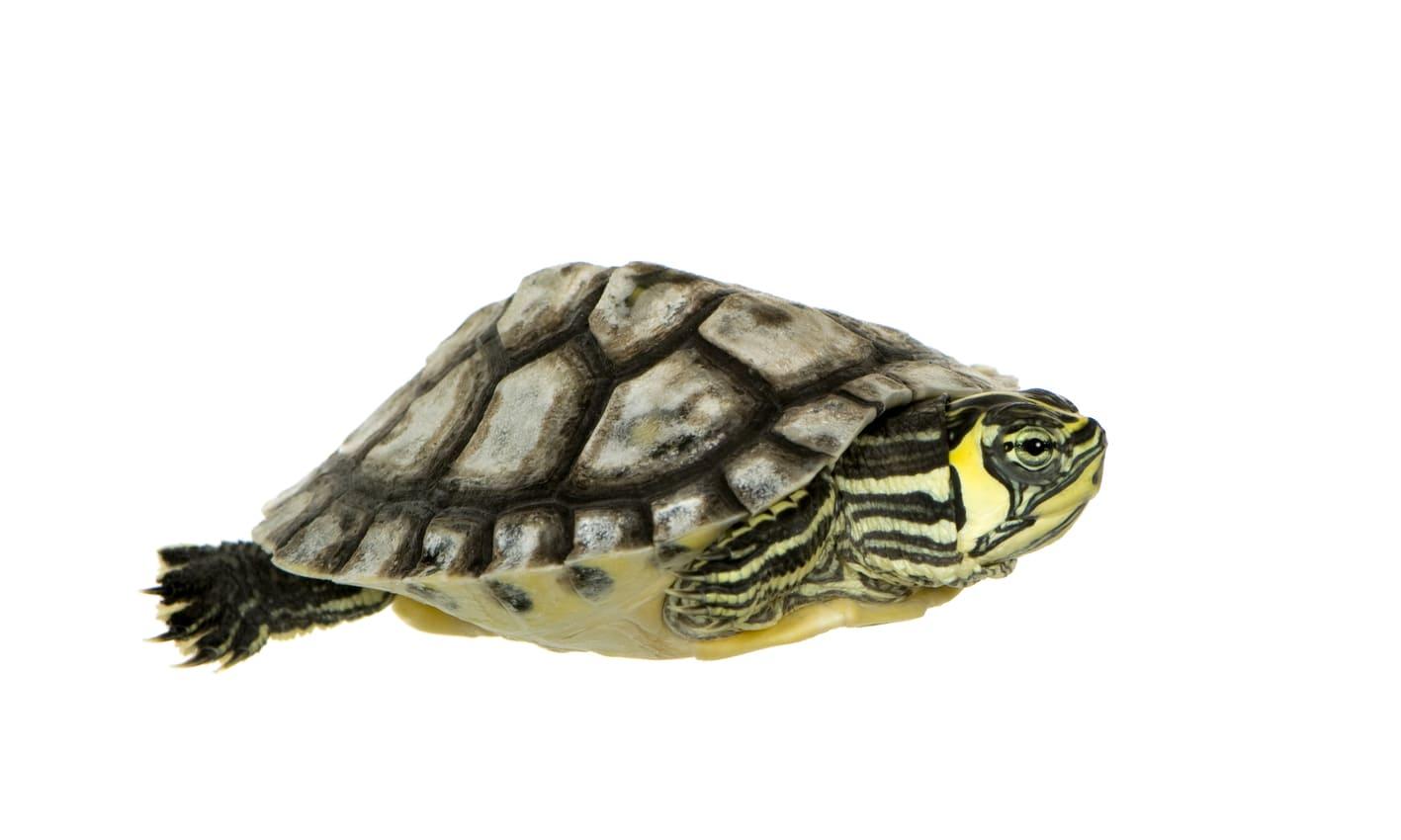 Услуги Черепахи фото