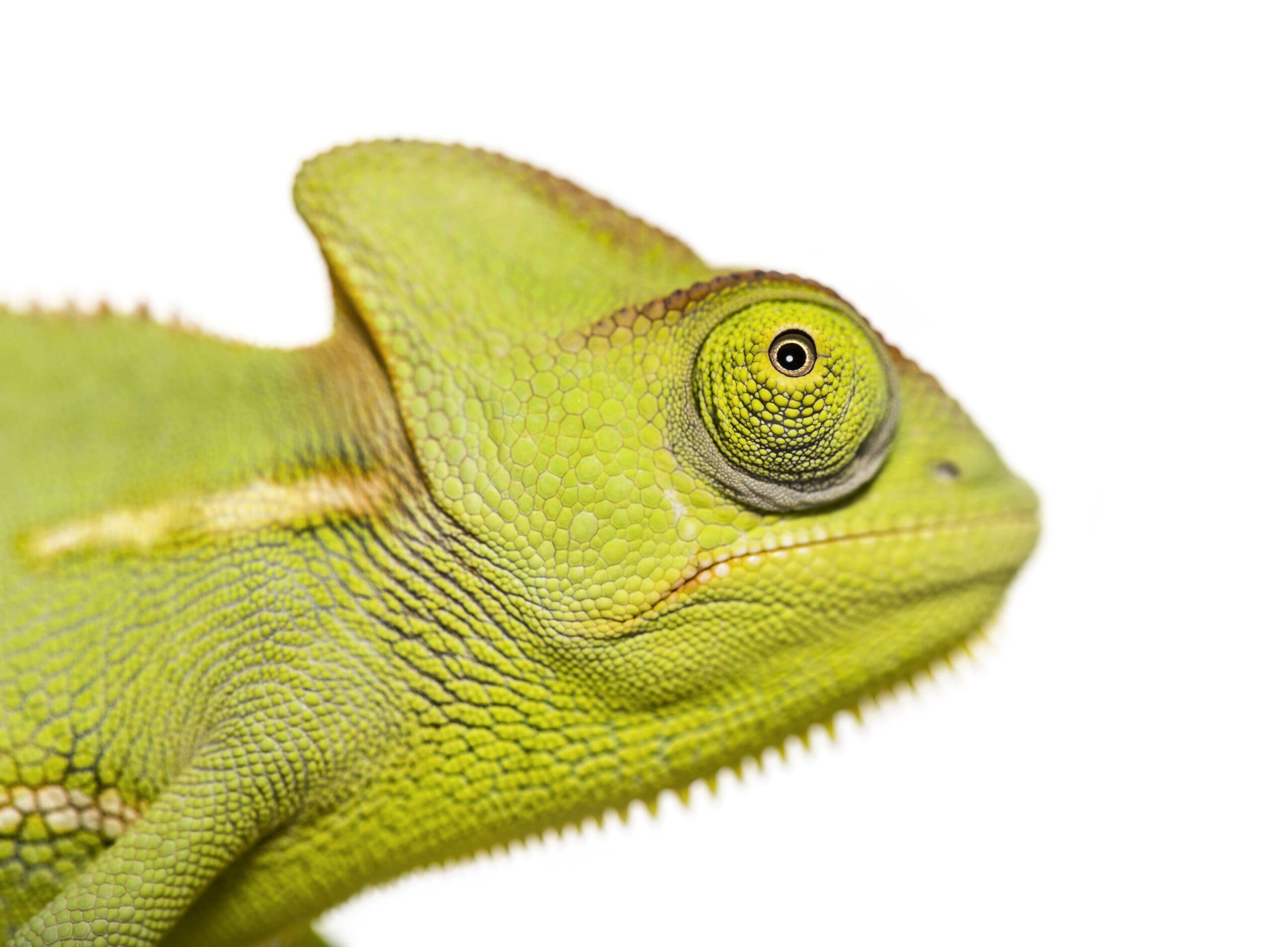 Услуги Рептилии фото